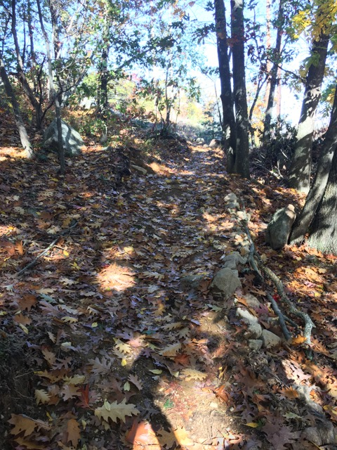 Ongoing trail vandalism, rogue trails at LLF and BBN-img_3015.jpg