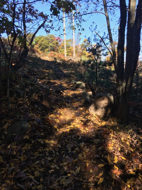 Ongoing trail vandalism, rogue trails at LLF and BBN-img_3017.jpg