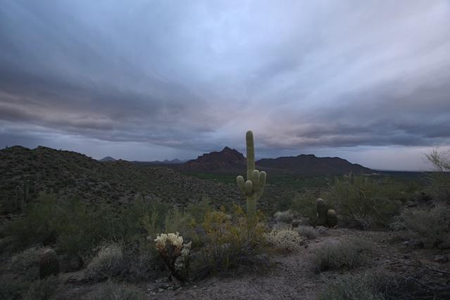 AZ Photo Friday-April 8-img_3178.jpg