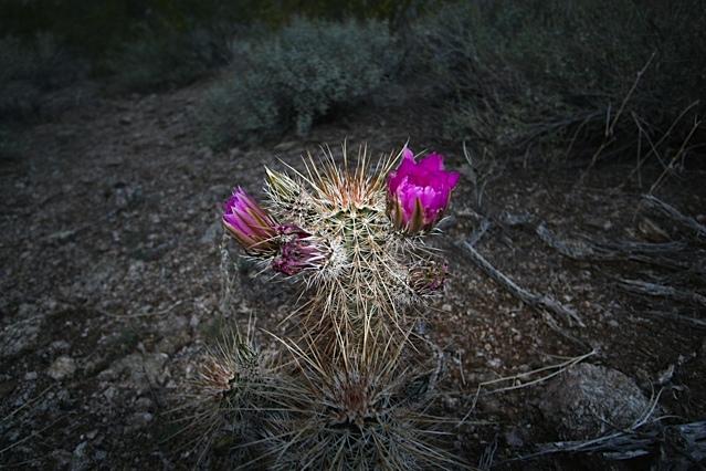 AZ Photo Friday-April 8-img_3185.jpg