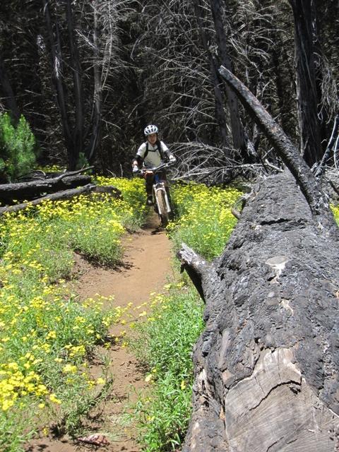 Mtn Biking on Maui-img_3232.jpg
