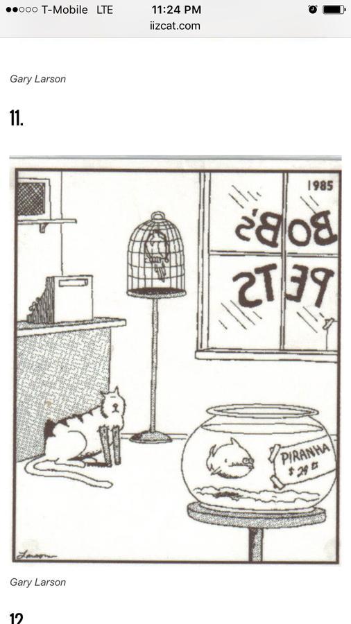 O.C. Official Daily Chuckle thread.... Comic Strip Enhanced...-img_3279.jpg