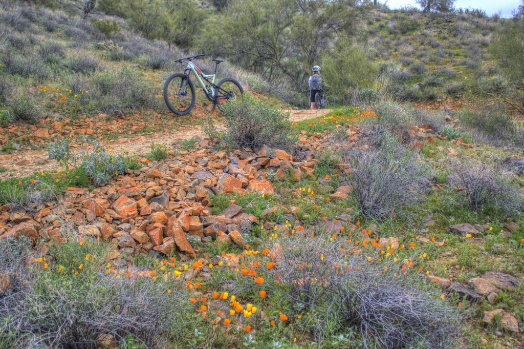 did you ride today?-img_3301_2_3-large-.jpg