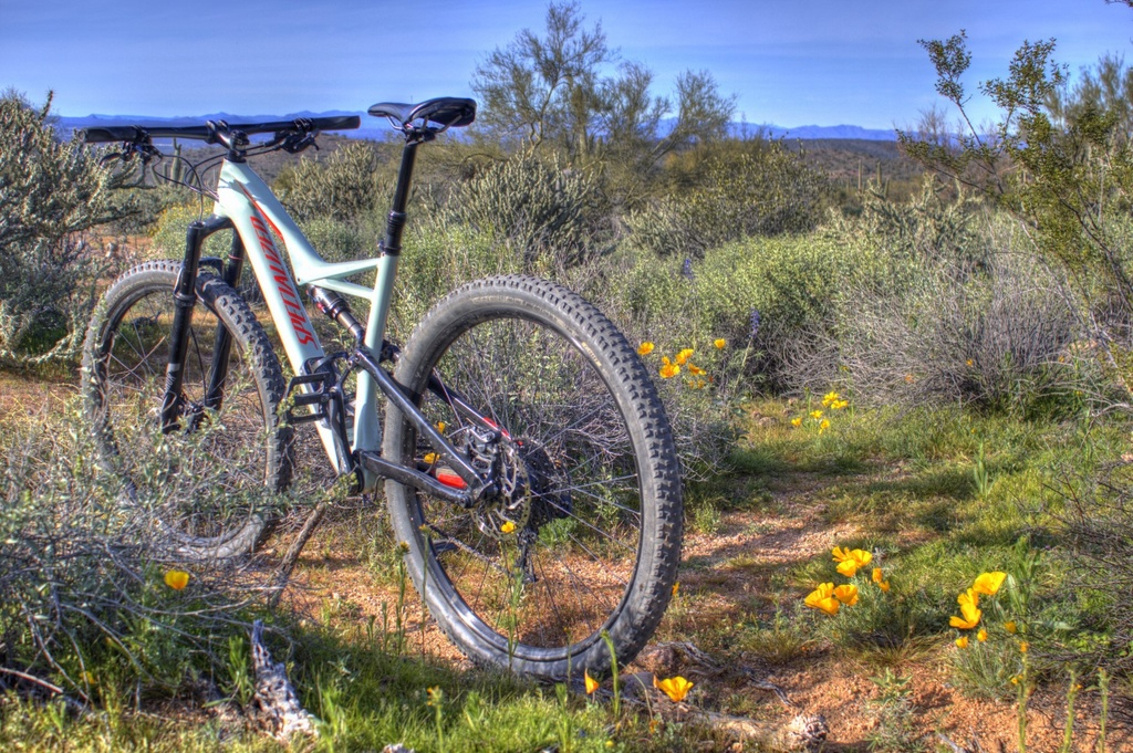 did you ride today?-img_3328_29_30-large-.jpg