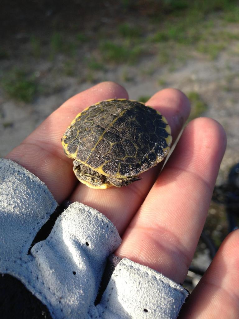 I like turtles-img_3449.jpg