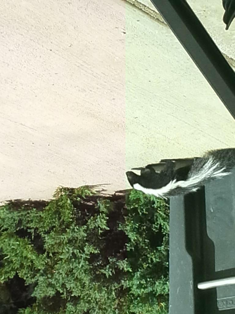 Ever Get Skunk-sprayed on a Ride?-img_3764.jpg