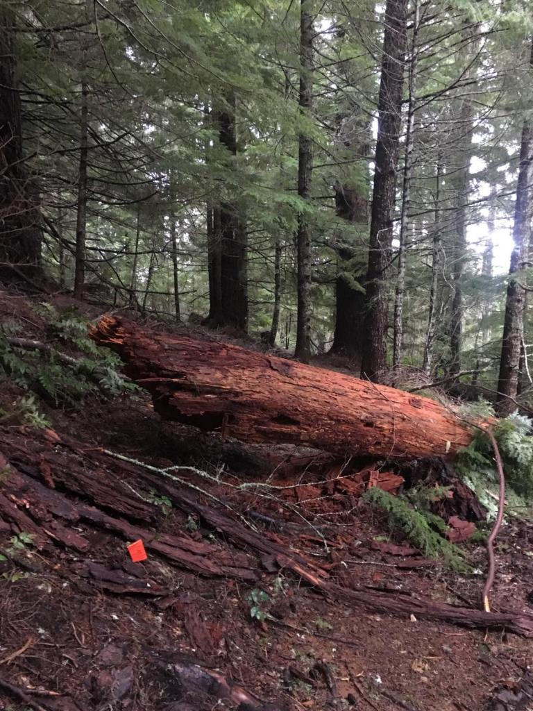2017 - Alsea Falls Trail System-img_3769.jpg