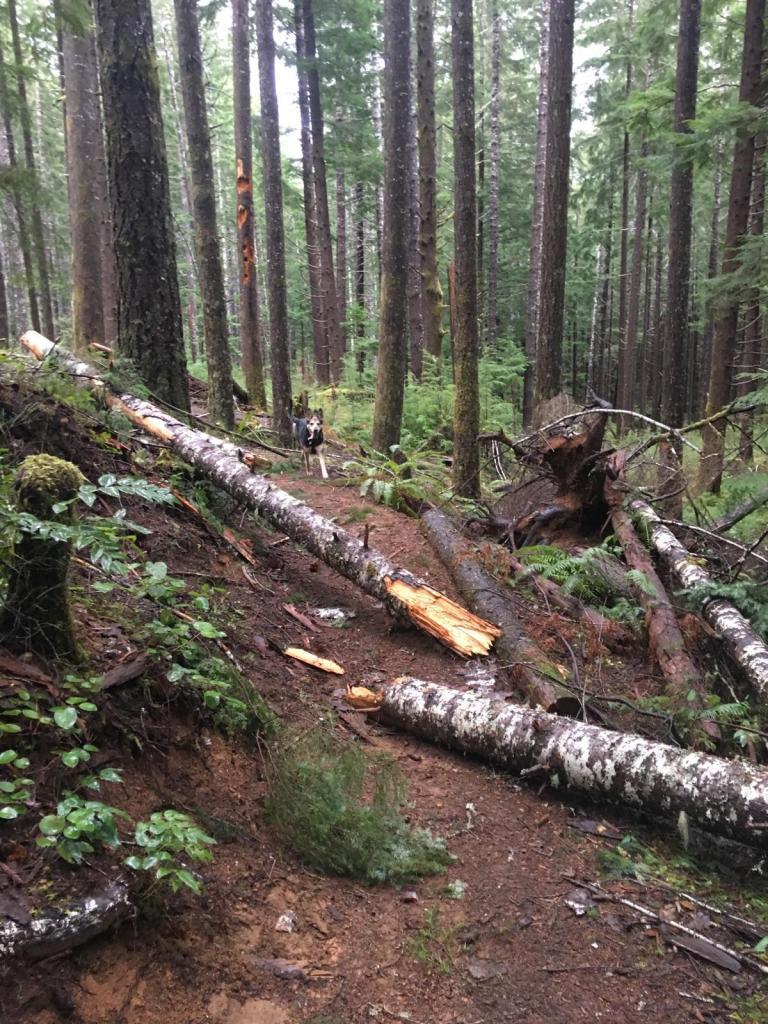 2017 - Alsea Falls Trail System-img_3794.jpg