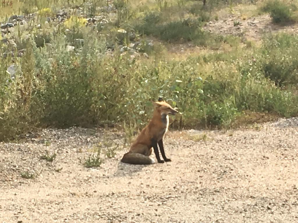 animal encounters-img_3819.jpg