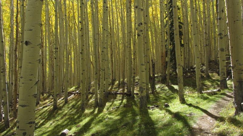 Post Pics of your Fall Foliage!!-img_3905.jpg