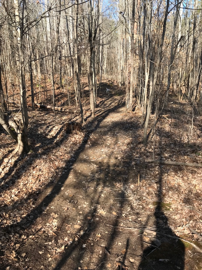 Trail Smoothing-img_4068.jpg