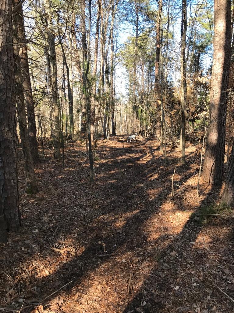Trail Smoothing-img_4069.jpg