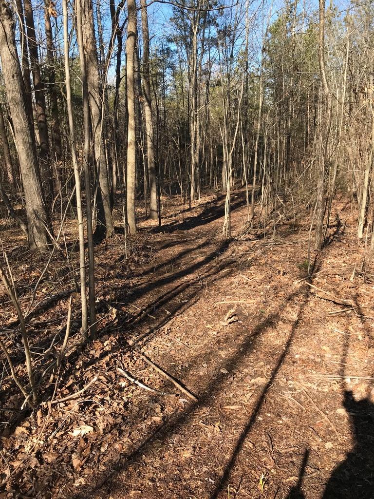 Trail Smoothing-img_4070.jpg