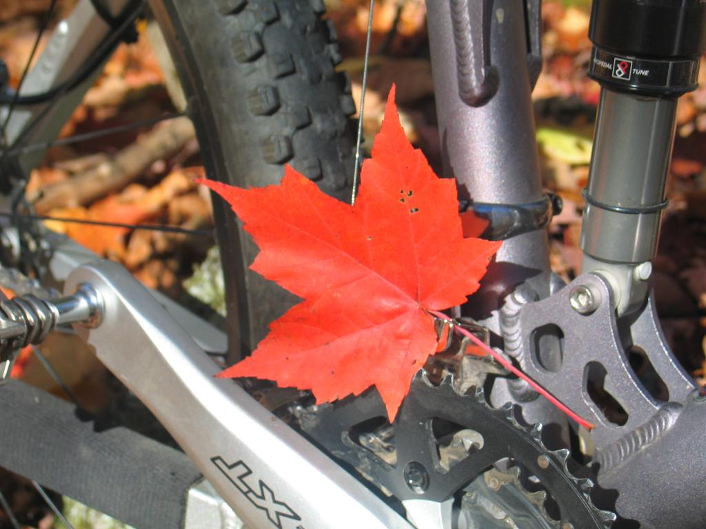2011 Fall Colors (with Bike)-img_4258.jpg