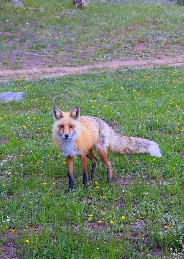 animal encounters-img_4307.jpg