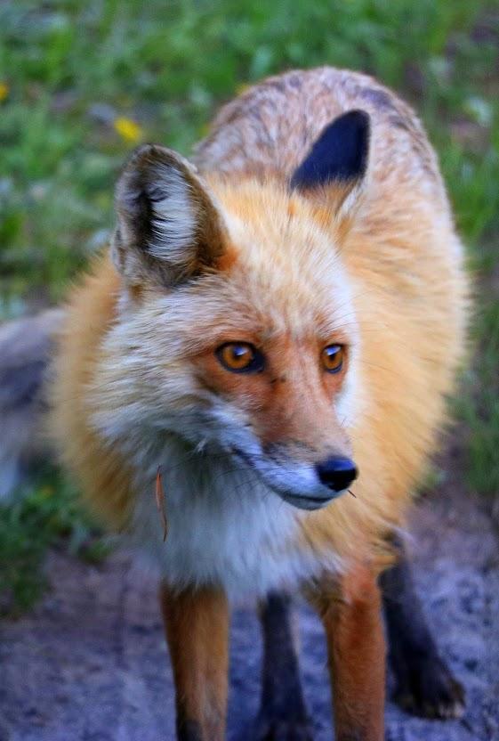 animal encounters-img_4316.jpg