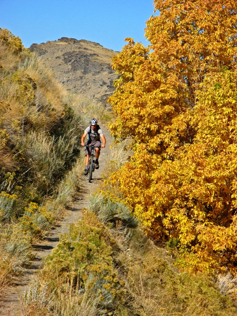 Post Pics of your Fall Foliage!!-img_4358.jpg