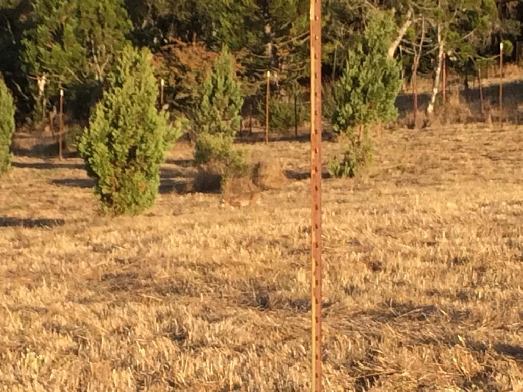 Mountain Lions: Who's seen one?-img_4577.jpg