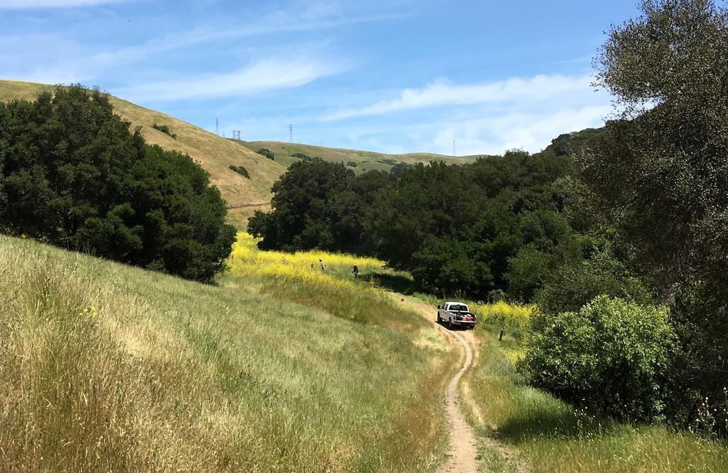 Crockett Hills - EXTREME bovine trail trashing!-img_4701.jpg