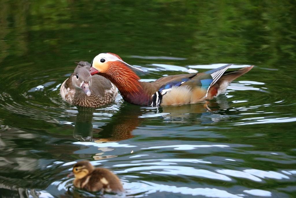 The Bird Thread...-img_4778-i-reduced.jpg
