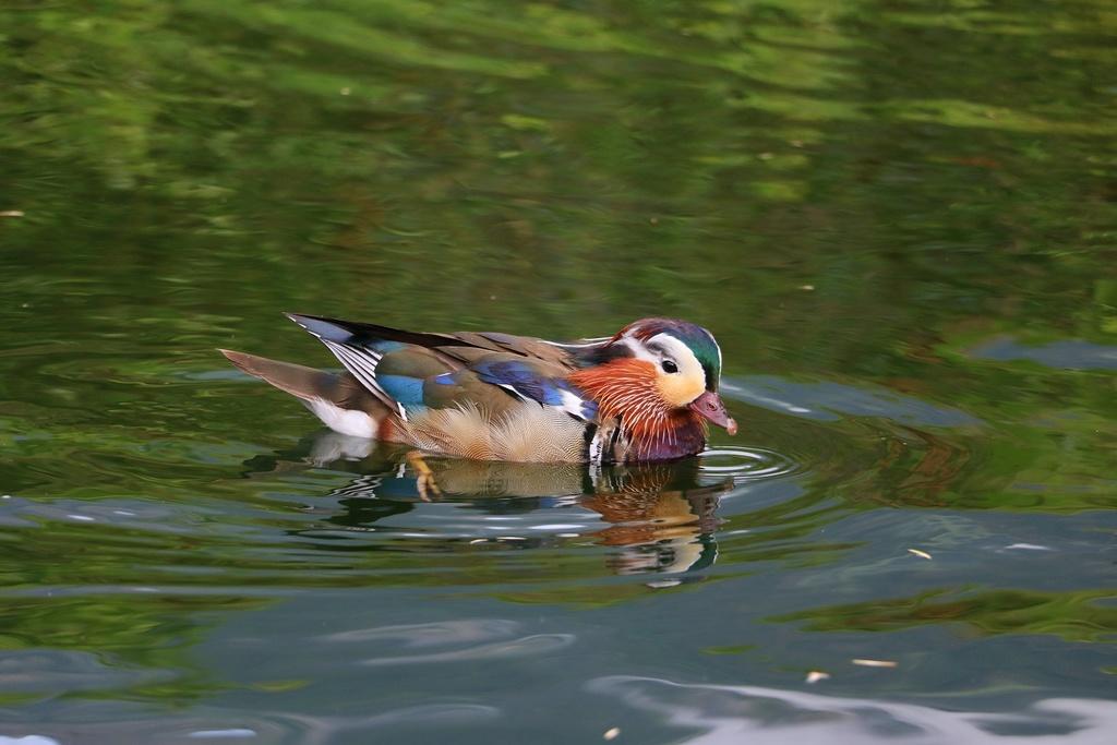 The Bird Thread...-img_4861-i-reduced.jpg