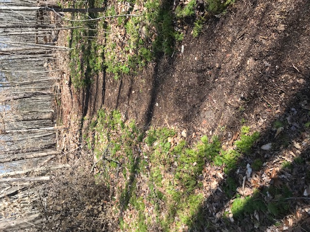 Berm Peak - Seths Bike Hacks new place-img_4946.jpg
