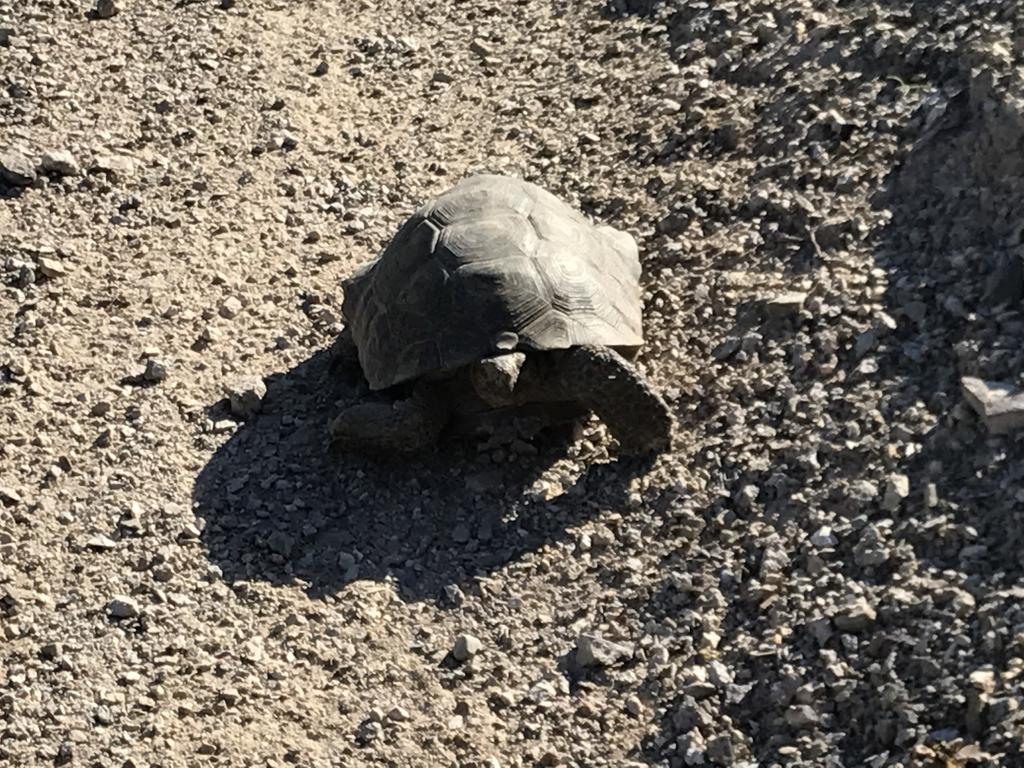 2017: Reptile Encounters-img_5055.jpg