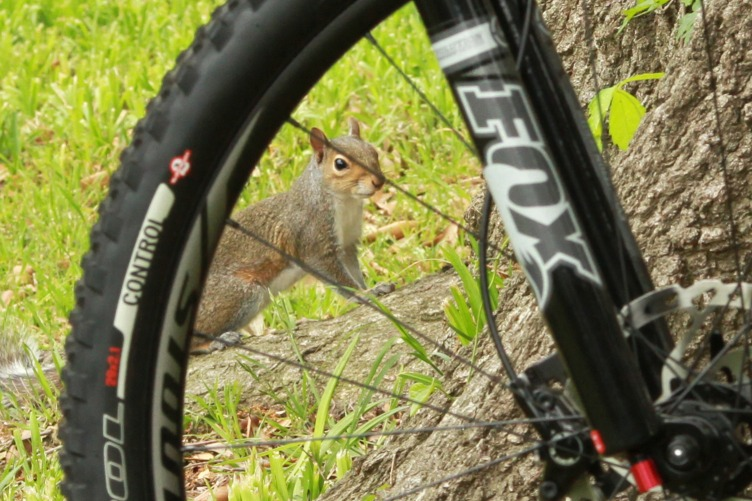 What did You do today on your mountain bike?-img_5060_fox.jpg