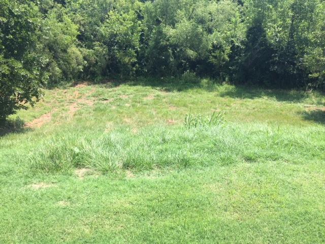 Help making new backyard trail-img_5071.jpg