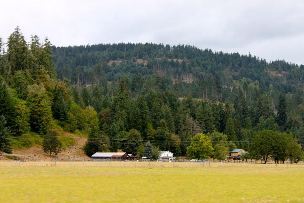 Seeking Trail Designer/Builder For a New Park In Springfield Oregon-img_5413.jpg