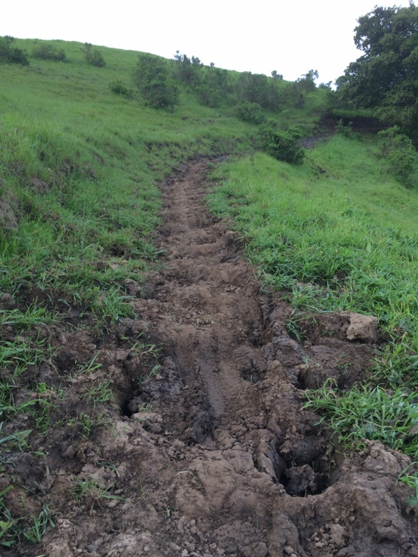 Crockett Hills - EXTREME bovine trail trashing!-img_5600-600x800-.jpg