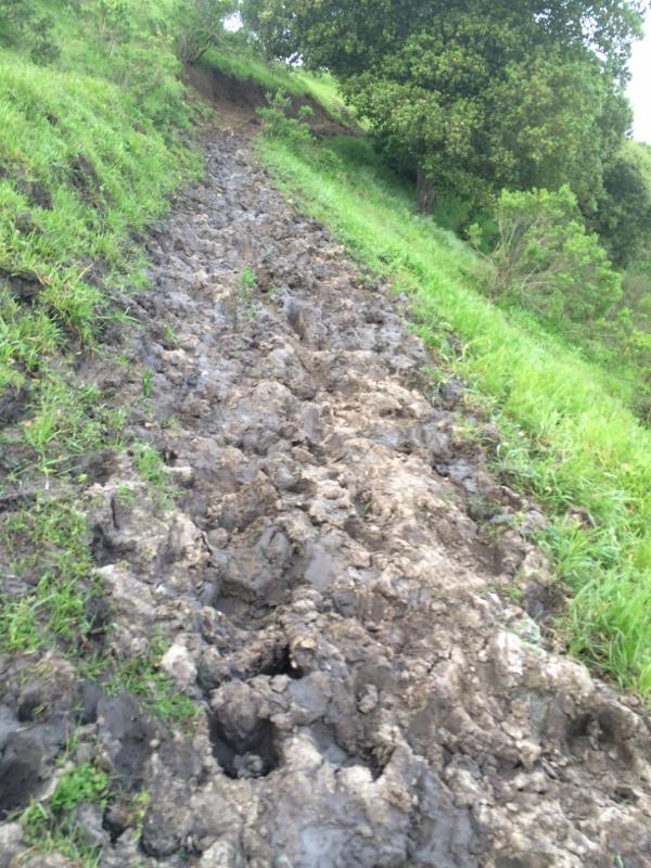Crockett Hills - EXTREME bovine trail trashing!-img_5602-600x800-.jpg