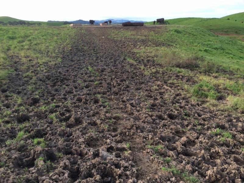Crockett Hills - EXTREME bovine trail trashing!-img_5608-800x600-.jpg