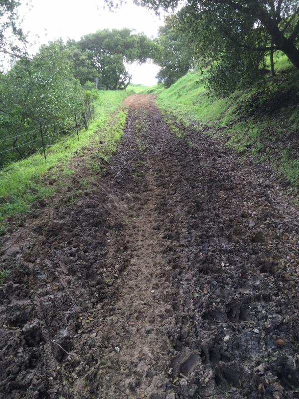 Crockett Hills - EXTREME bovine trail trashing!-img_5624-600x800-.jpg