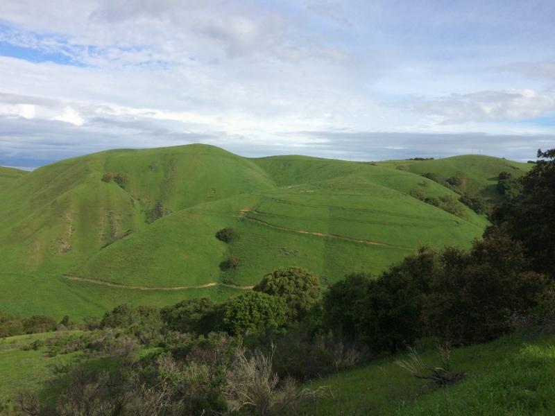 Crockett Hills - EXTREME bovine trail trashing!-img_5634-800x600-.jpg