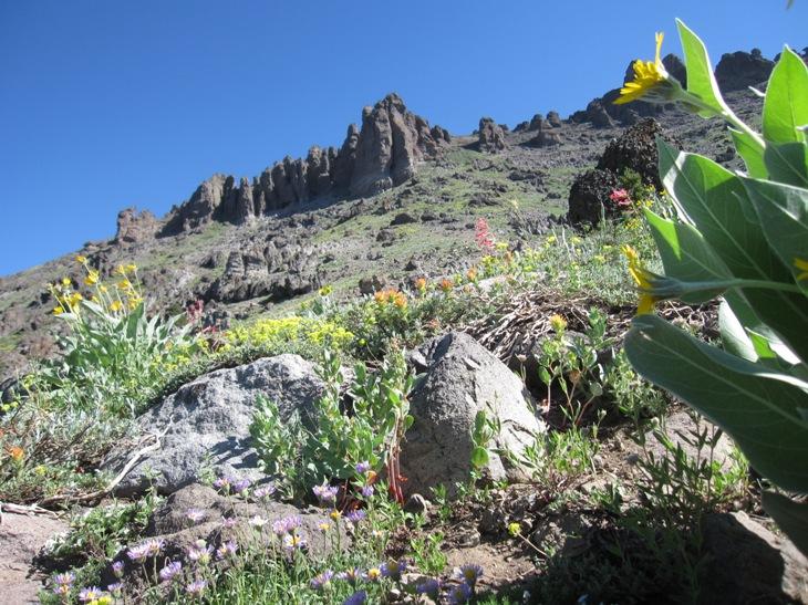 Thunder Mountain / Horse Canyon-img_5754.jpg