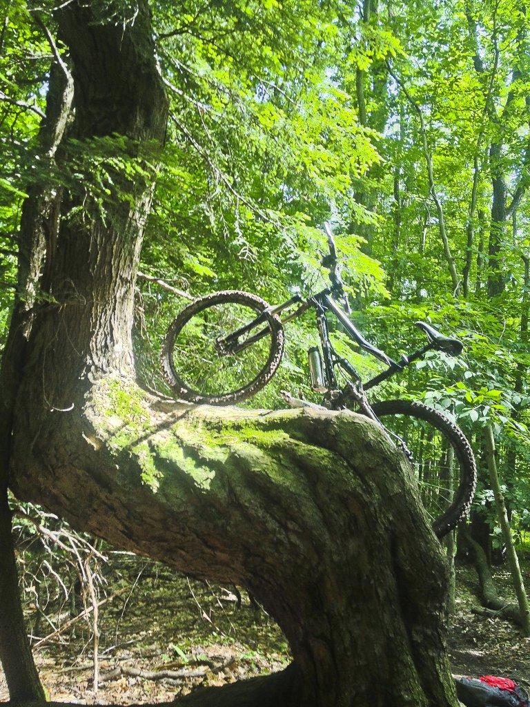 Bike Pics!-img_6007.jpg