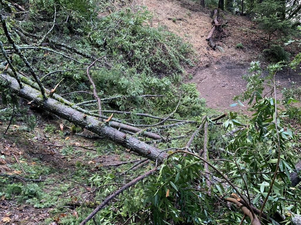 Nov 30-Dec 2, 2018 Weekend Rain and Trails Report-img_6014.jpg