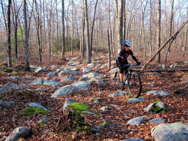 Douglas State Forest Trail Conditions?-img_6570.jpg