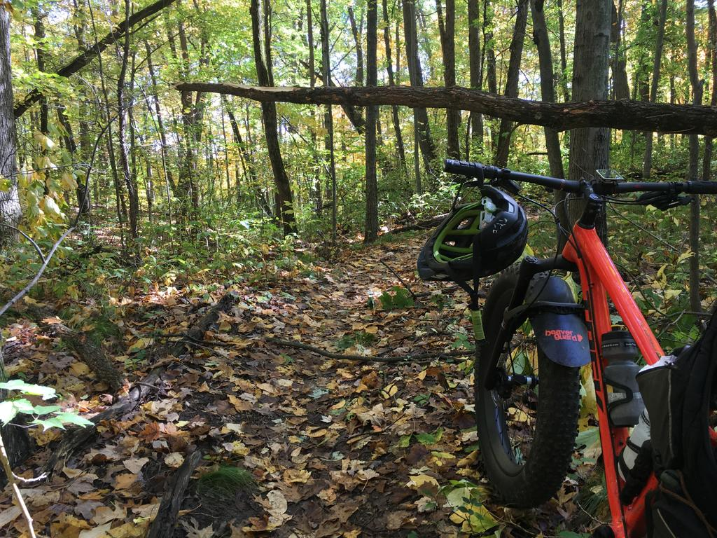 did you ride today?-img_6980c.jpg