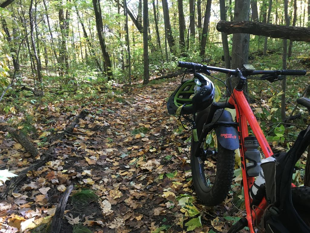 did you ride today?-img_6981c.jpg