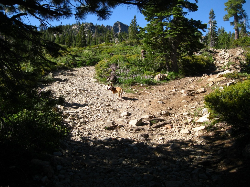 Downieville Gathering is almost here. June 24-26-img_7574.jpg