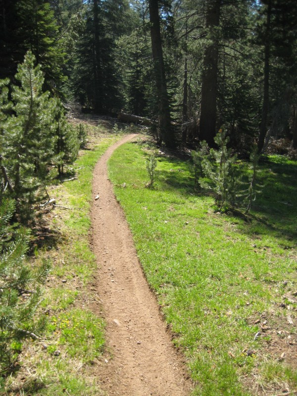Current conditions for the Cannell Trail...-img_7758.jpg