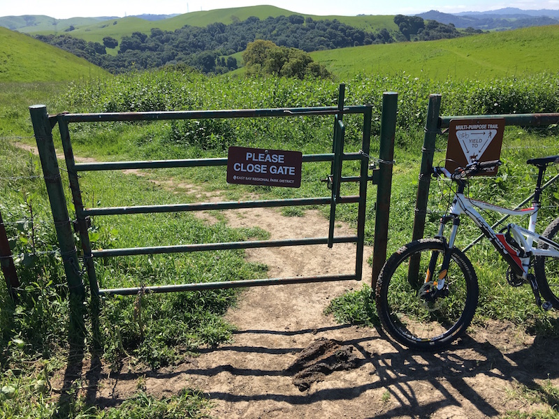 Crockett Hills - EXTREME bovine trail trashing!-img_7910.jpg