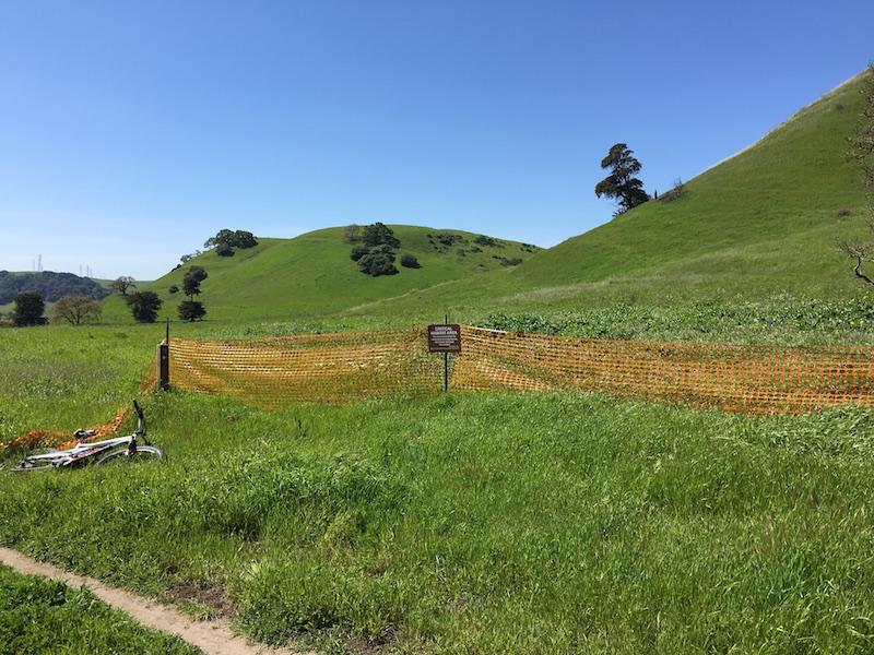 Crockett Hills - EXTREME bovine trail trashing!-img_7930.jpg