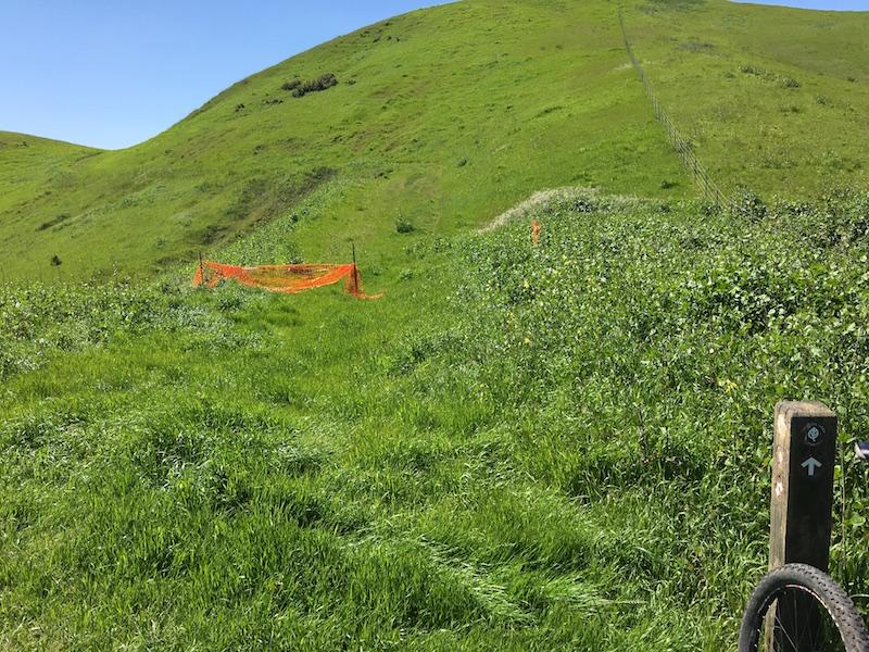 Crockett Hills - EXTREME bovine trail trashing!-img_7932.jpg
