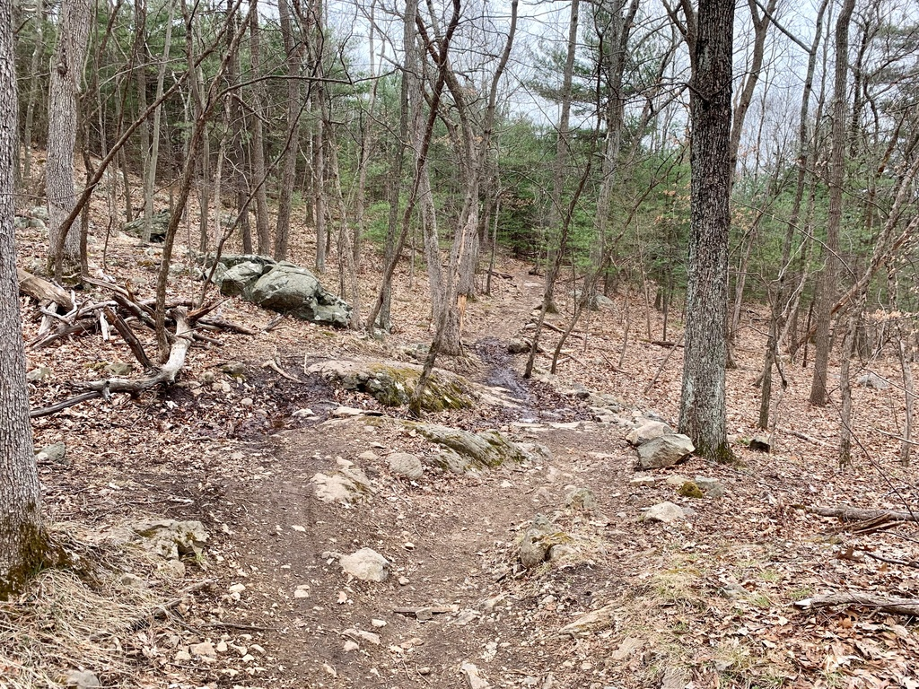 What are the current trail conditions in Mass?-img_7943.jpg