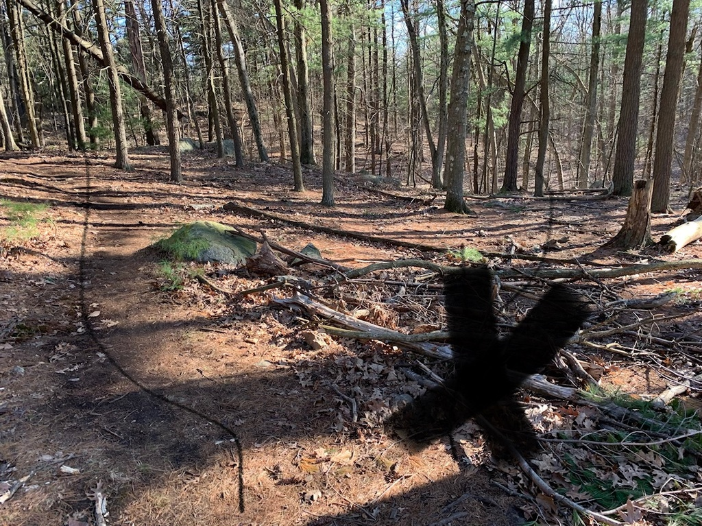 What are the current trail conditions in Mass?-img_7996.jpg