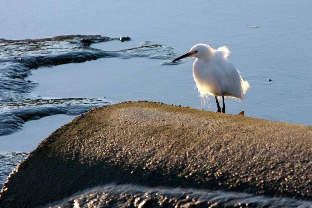 OT: Bird Pix...-img_9556.jpg