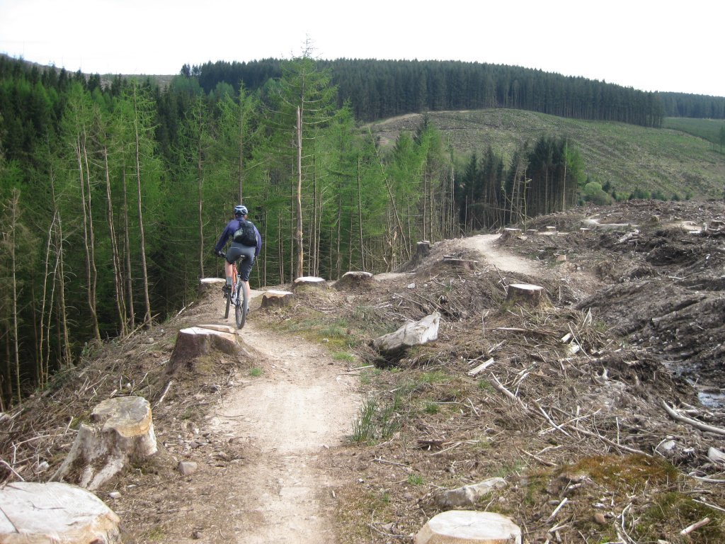Help prevent rampant logging on USFS lands-img_9734.jpg